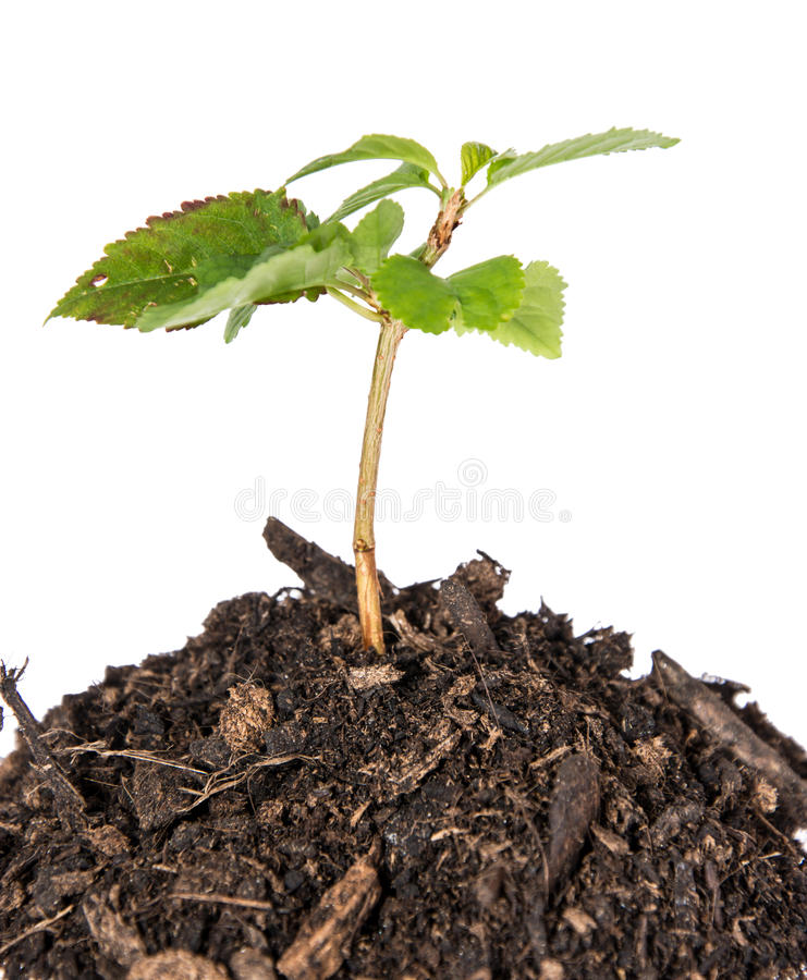 Download Seedling In A Heap Of Earth Stock Image - Image: 33245955