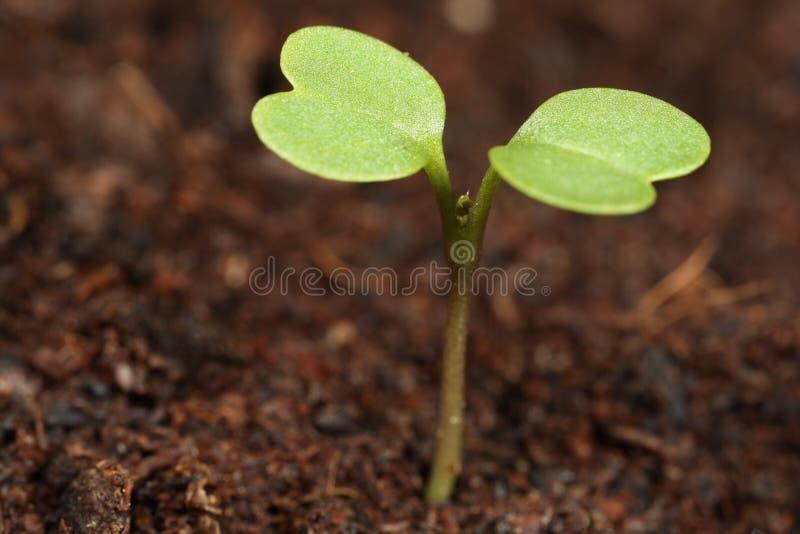 Seedling Macro stock photography