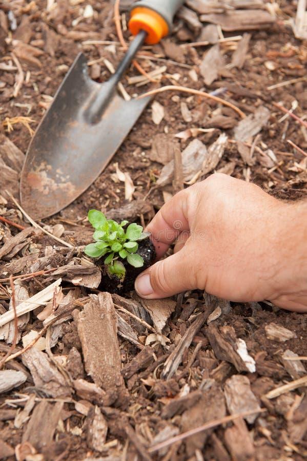 Download Seedling Planting Royalty Free Stock Photos - Image: 30356128