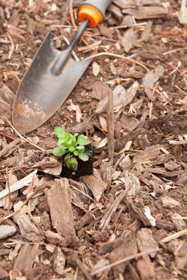 Seedling Planting Stock Photo