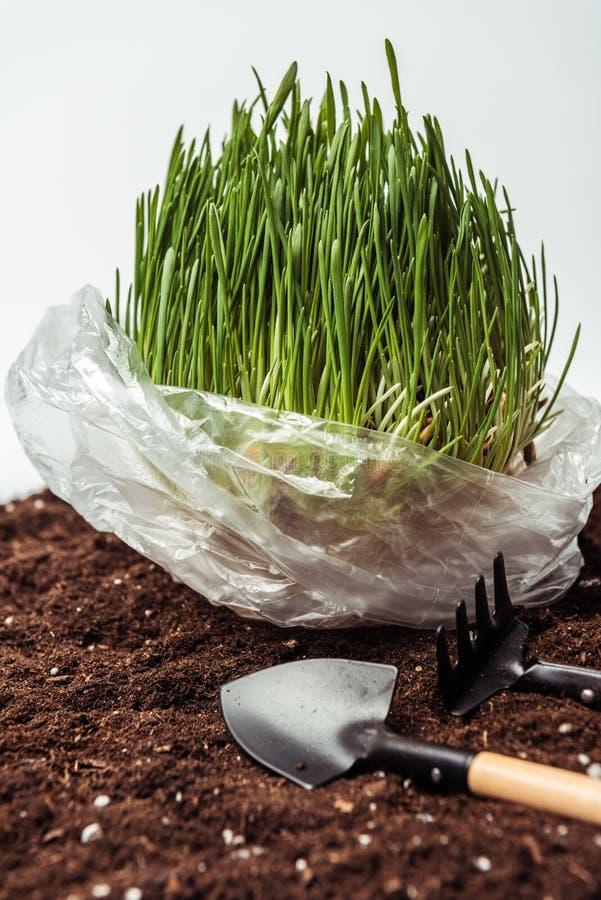 seedling in plastic bag on soil with garden shovel and rake vector illustration