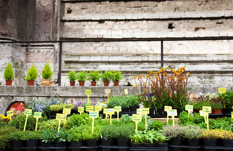 Download Seedling For Sale On The Street Stock Image - Image: 8853583