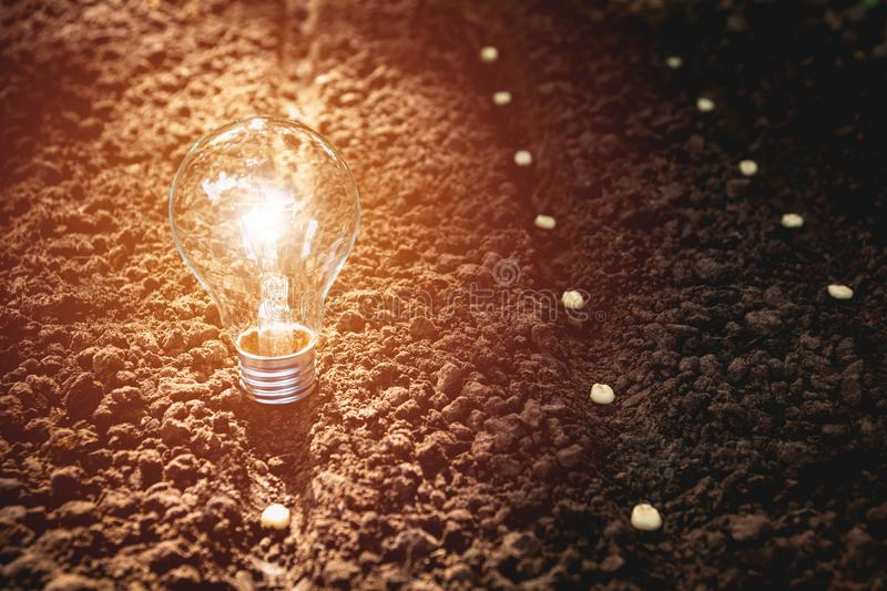 Seedling in the soil with light bulb for saving energy and power. Concept stock images