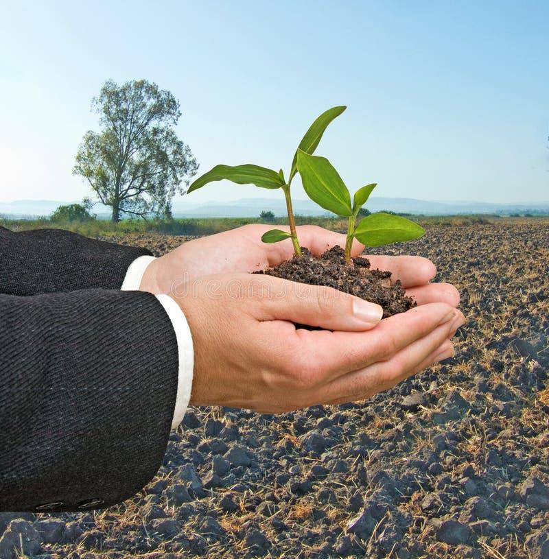 Seedlings à disposicão fotos de stock royalty free