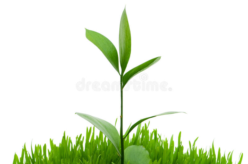 Seedlings. Illustrating the concept of new life royalty free stock image