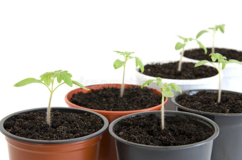 seedlings foto de archivo