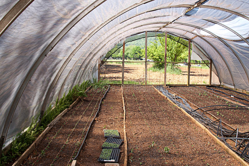Download Seedlings In Cold Frame Royalty Free Stock Image - Image: 31066726