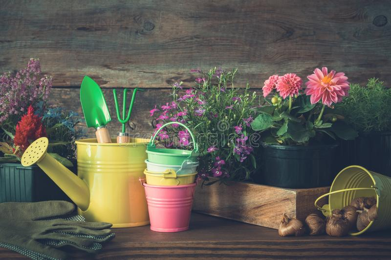 Seedlings of garden plants and flowers in flowerpots. Watering can, buckets, shovel, rake, gloves. stock photos