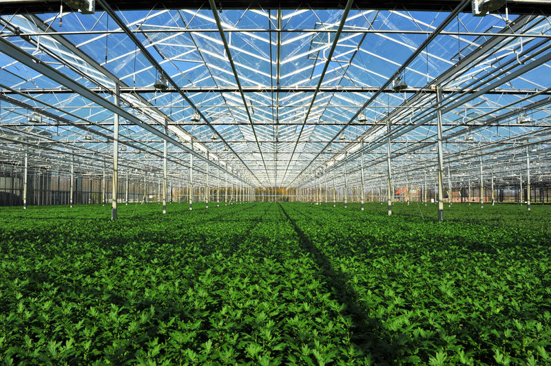 Seedlings in greenhouse. Young plants inside of greenhouse-potted plants royalty free stock photography