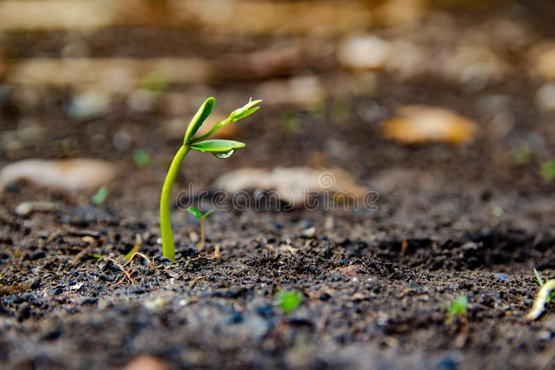 Seedlings are growing from the ground stock images