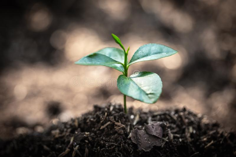 Seedlings are growing, planting tree, reduce global warming, growing a tree, love nature, World Environment Day.  royalty free stock images