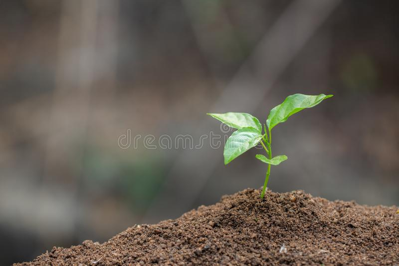 Seedlings are growing, planting tree, reduce global warming, growing a tree, love nature, World Environment Day. ใ stock photography