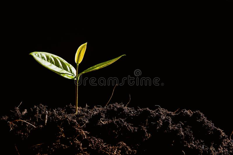 Seedlings are growing on the soil. stock image