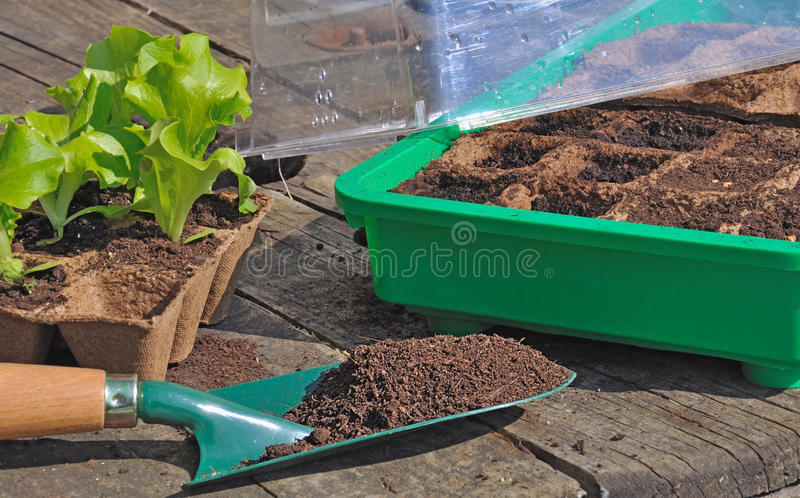 Seedlings in mini greenhouse royalty free stock photos