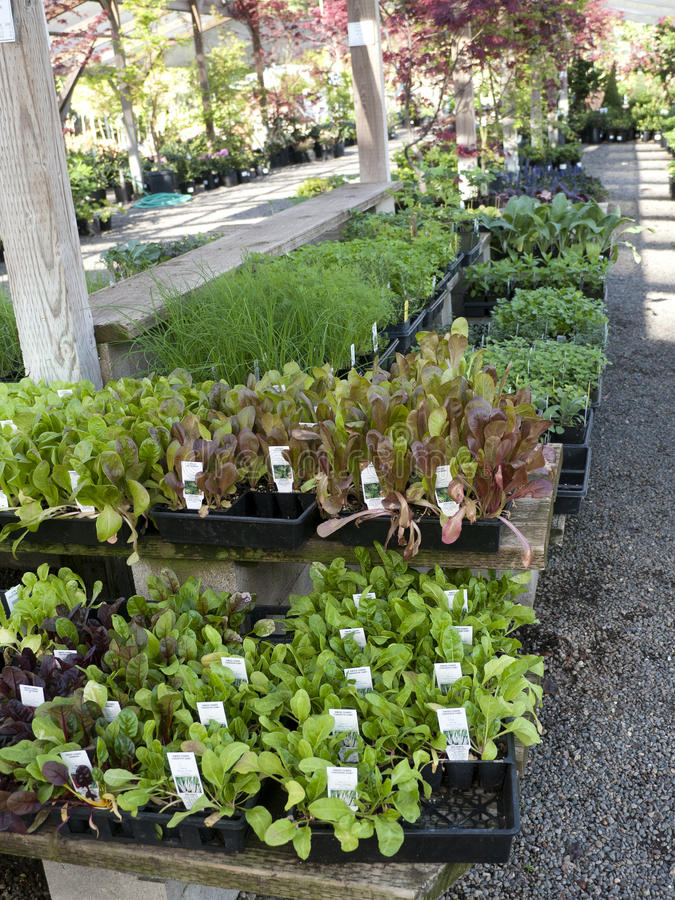 Download Seedlings Plants In Plastic Containers Stock Photo - Image: 30232304