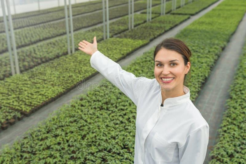 Seedlings production, Spring Seedlings. Successful young. Nursery owner. Greenhouse Seedlings Nursery stock image