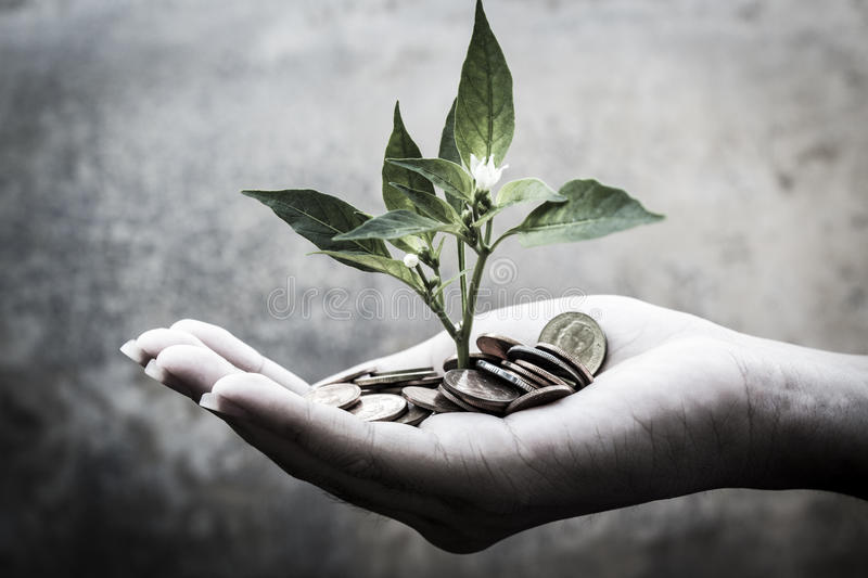 Seedlings of riches royalty free stock image