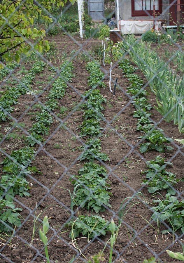 Free Seedlings, Spring, Cottage, Garden, Flower Planting, Basket Seedlings, Green Mouths Stock Photos - 182644393