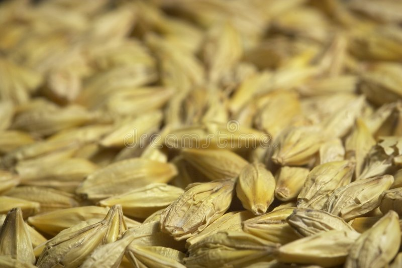 Download Seeds stock image. Image of nutritious, biofood, closeup - 122723