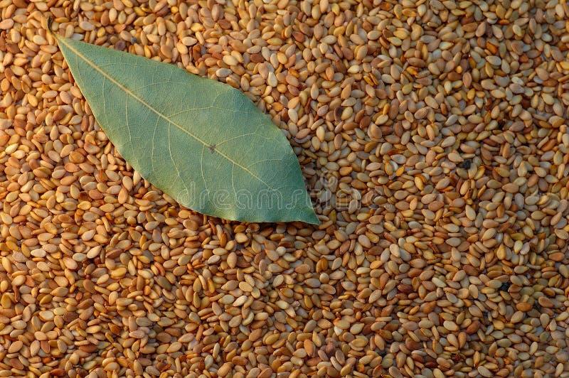 Seeds & bay leaf