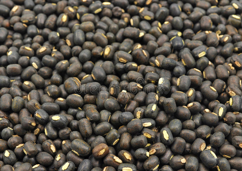 Seeds of black gram. Close up of whole seeds of black gram royalty free stock images