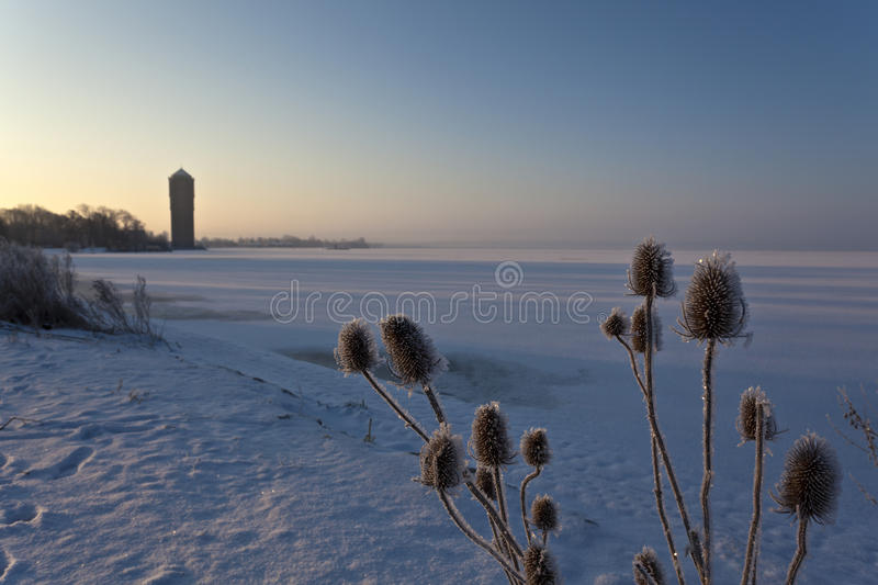 Seeds covered with snow along a frozen lake royalty free stock image