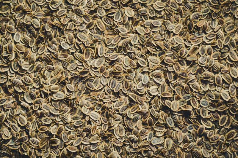Seeds of fennel seeds closeup. Background, texture stock photo