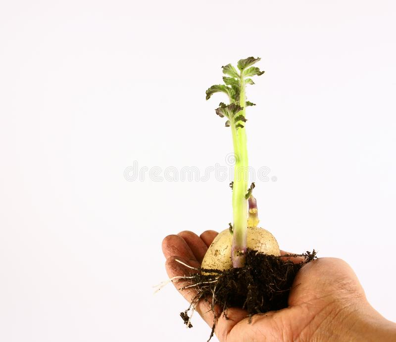 Download Seeds growing stock photo. Image of healthy, economy, develop - 2103998