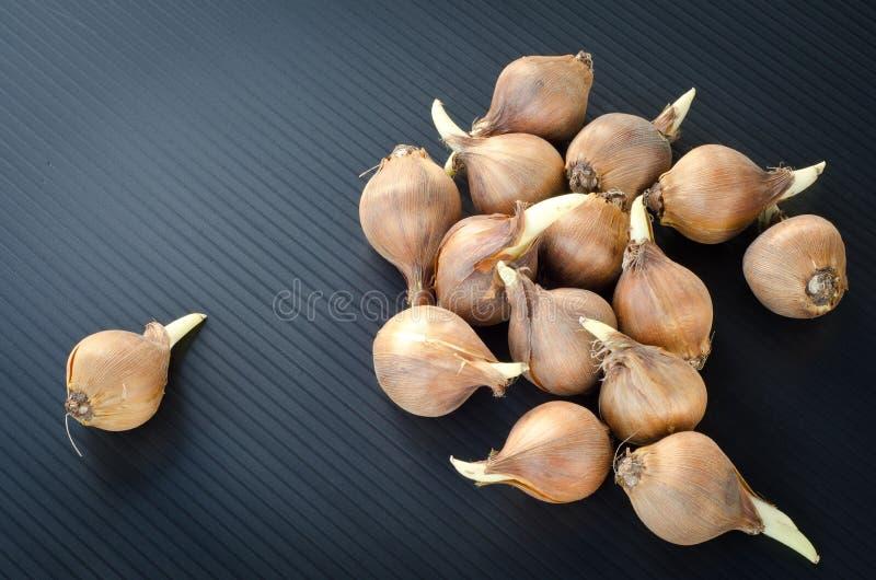 Seeds of iris stock images