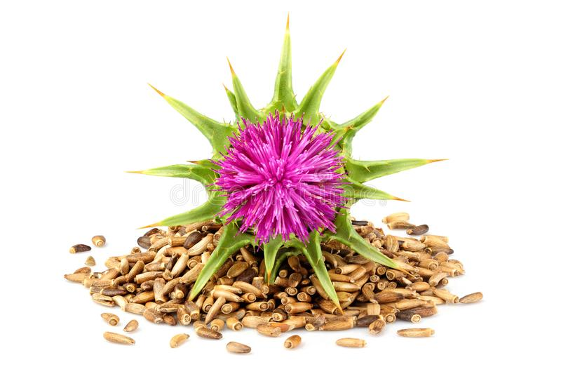 Seeds of a milk thistle with flowers. stock photos