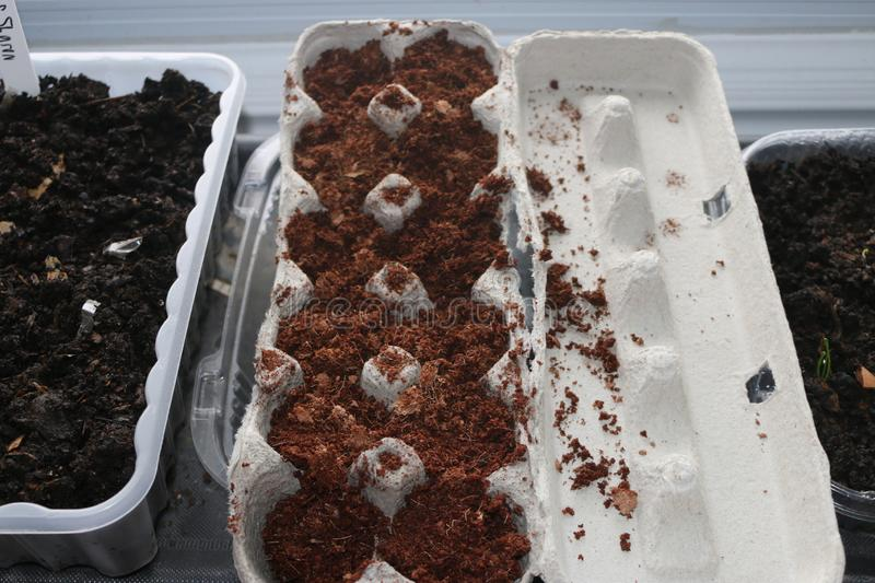 Seeds planting in used egg cartons starting in door germinating. Seeds planting in used egg cartons starting in door germinating royalty free stock photos