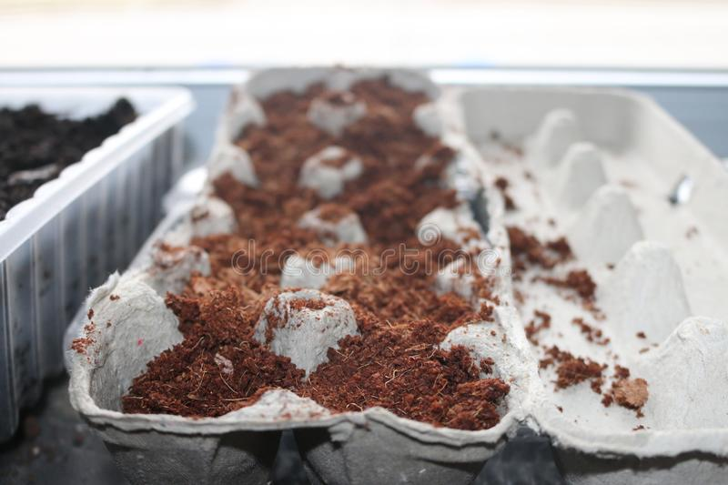Seeds planting in used egg cartons starting in door germinating. Seeds planting in used egg cartons starting in door germinating stock image