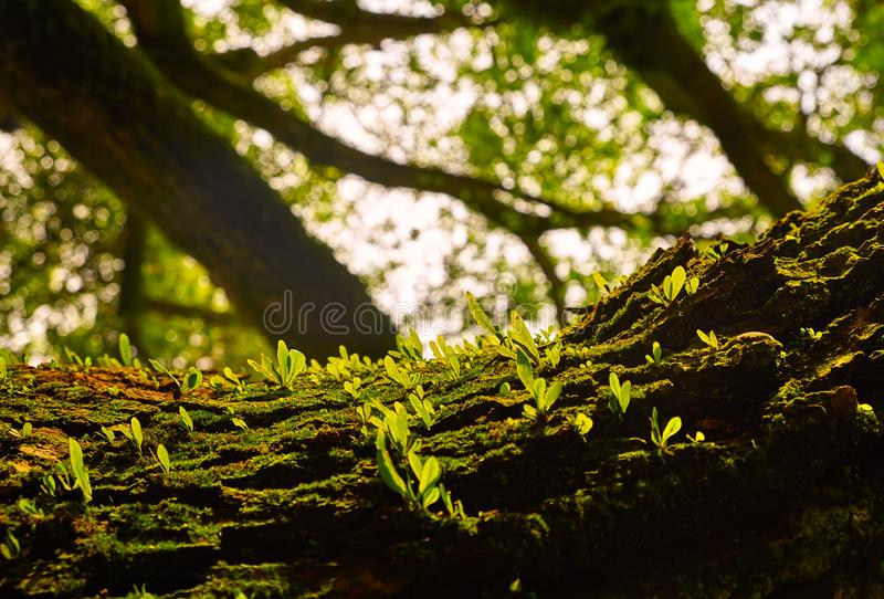 Seeds sprouting on tree trunk stock photography