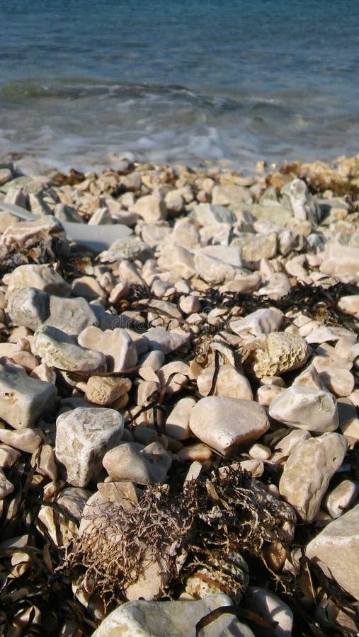 Seefelsen auf dem Ufer lizenzfreies stockbild