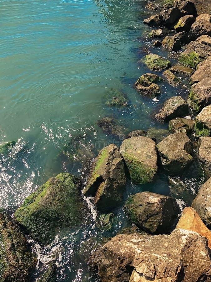 Seefelsen und -algen in San Francisco Bay lizenzfreie stockfotos