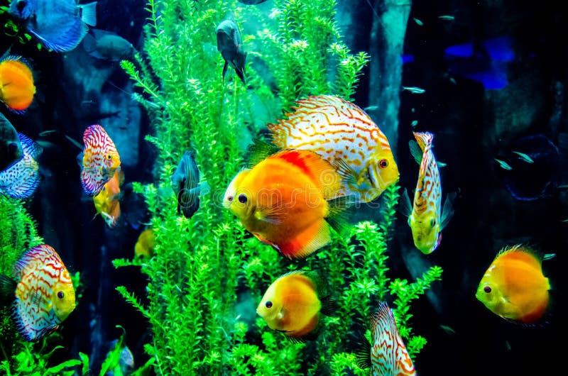 Seefisch im Ozean lizenzfreies stockbild