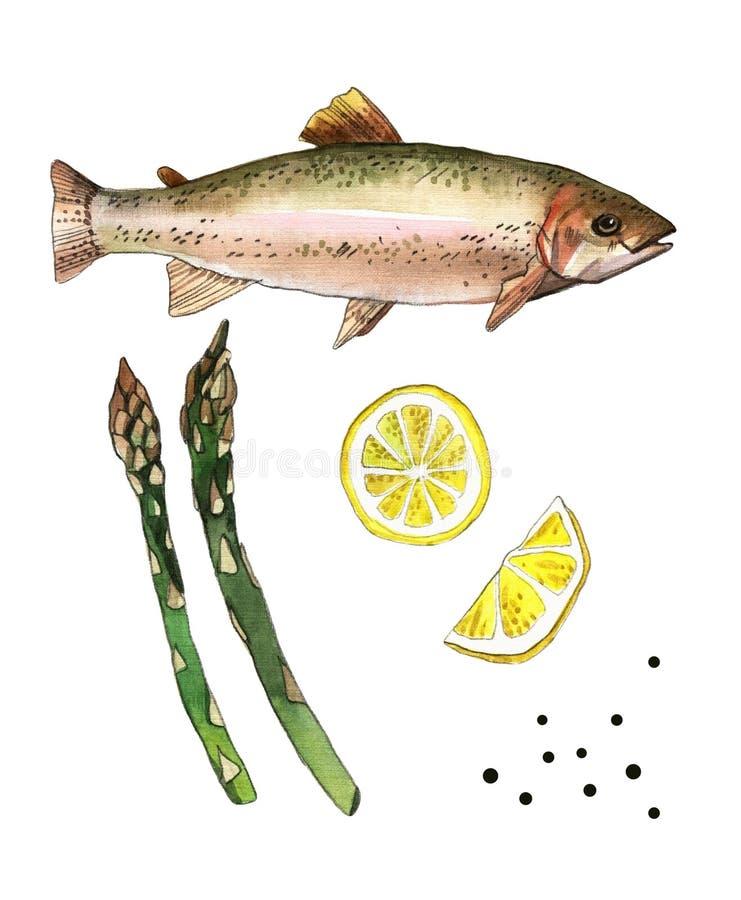 Seeforellenfische mit Zitrone und Spargel Handgemachte Aquarellmalereiillustration auf einem Weißbuchkunsthintergrund stock abbildung