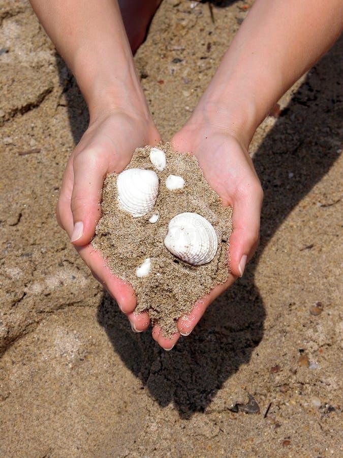 Seegeschenk - Shells stockbilder