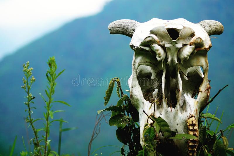 Seeing the horizont. A skull that are not died, it has memories, is seeing the horizont, remembering his past life stock photo