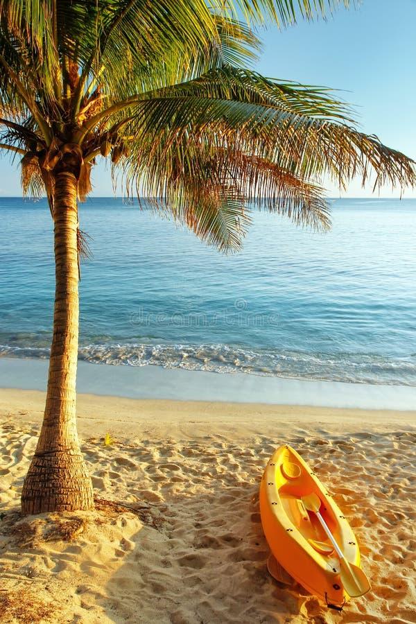 Seekajak auf dem Strand nahe Palme stockfoto