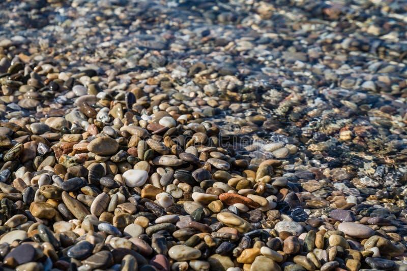 Seekiesel auf einem sauberen Strand als Beschaffenheit, Hintergrund stockfotografie
