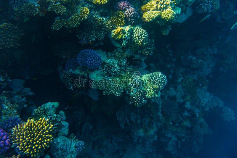 Seekorallenriff mit Steinkorallen, Fischunterwasserfoto lizenzfreie stockbilder