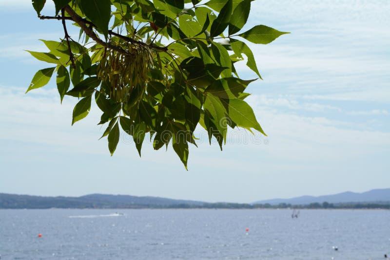 Seelandschaft mit einer Baumidee stockbilder
