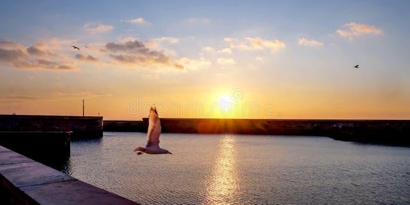 Seemöwenfliegen über der Sonne in Brighton Marina, Großbritannien lizenzfreie stockfotos