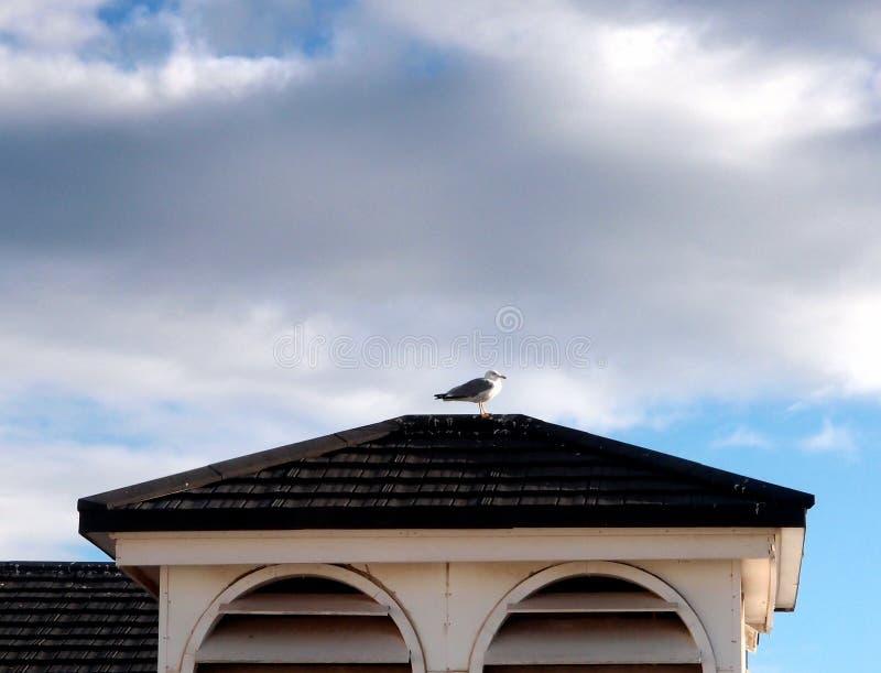 Seemöwe auf Dach lizenzfreie stockbilder
