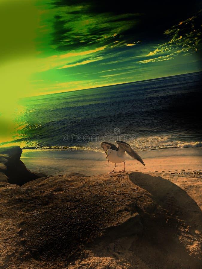 Seemöwe auf dem Strand stockbild