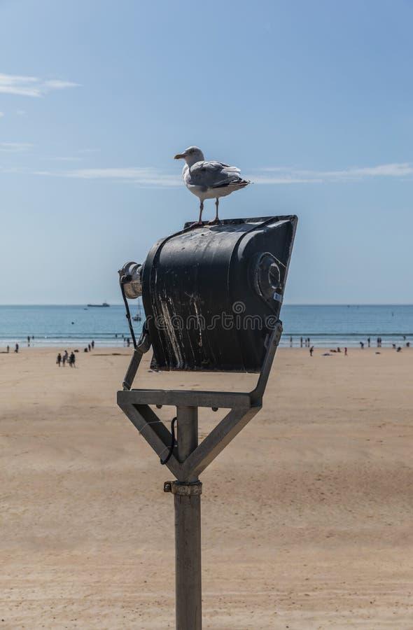 Seemöwe auf einem Projektor am Strand lizenzfreies stockfoto