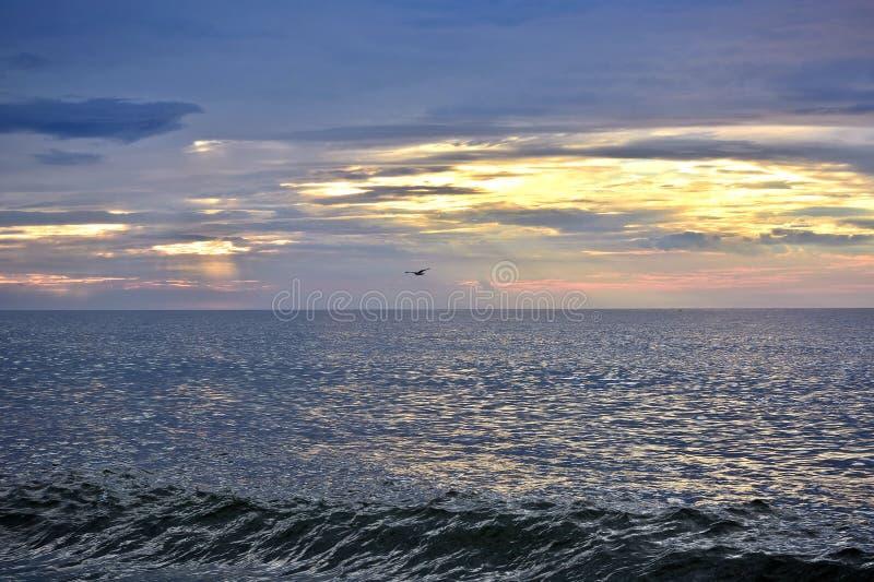 Seemöwe, die über Ozean bei Sonnenaufgang fliegt stockfotos