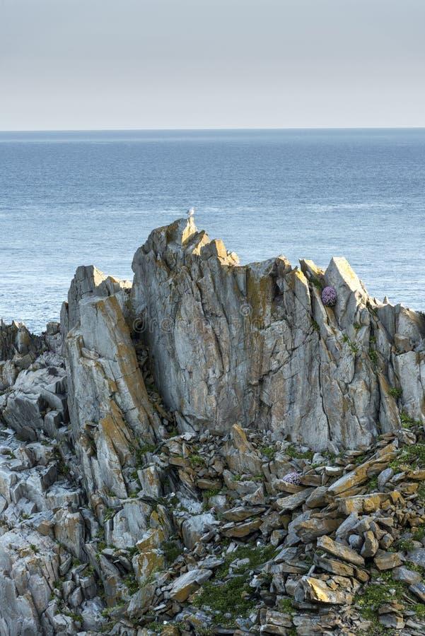 Seemöwe, die auf die Oberseite des Felsens sitzt stockfotos