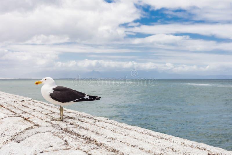 Seemöwe, die auf einer Hafenwand sitzt stockbilder